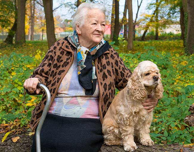 elderly dog walking service