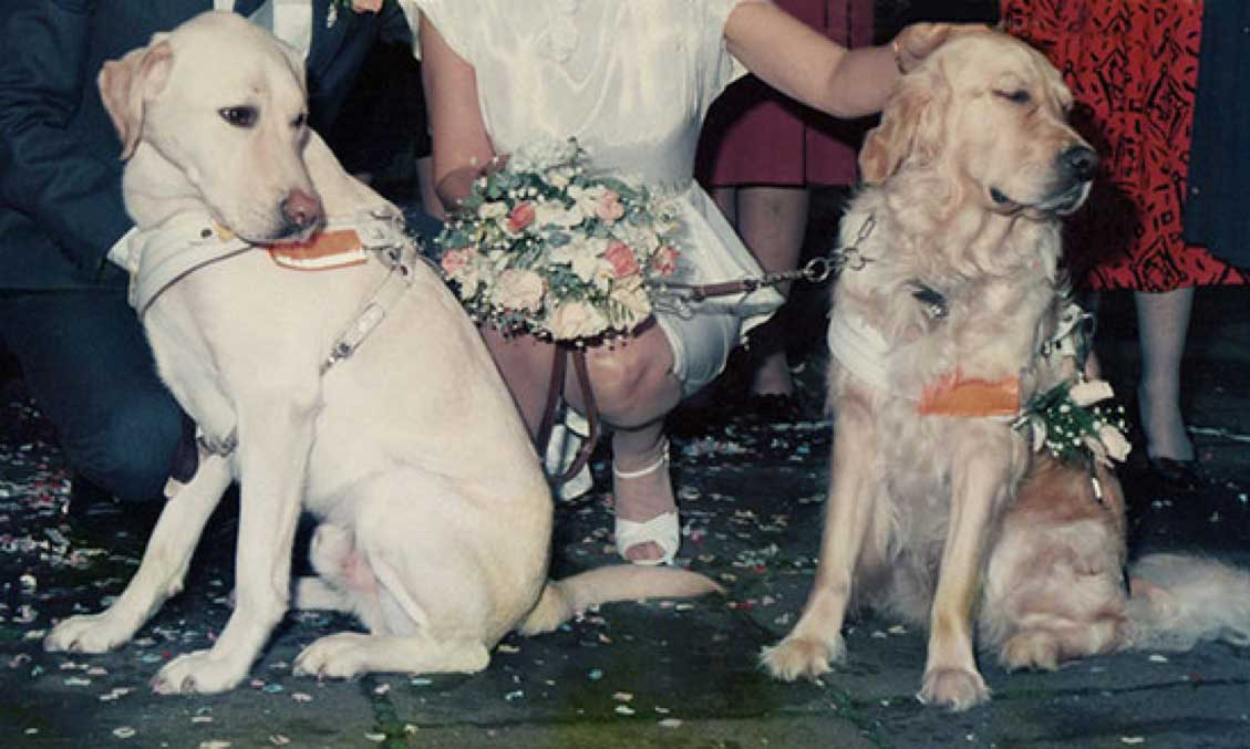 Our guide dogs Quanta and Wenna on our wedding day